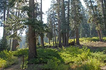 Seven giant sequoia groves within hike of sequoia high sierra camp